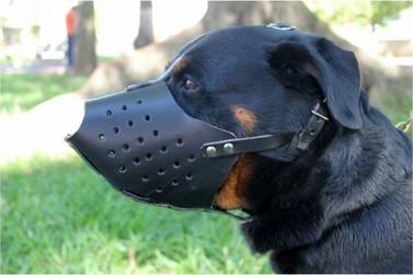 Lucas do Rio Verde: Cães de grande porte poderão ser obrigados a usar focinheira