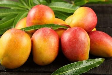 Conheça os benefícios da manga, a fruta da estação!