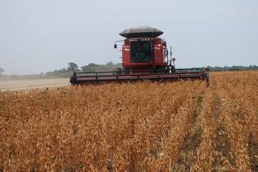 Lucas do Rio Verde tem colheita de soja mais avançada do Centro-Oeste