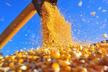 Entidade reforça necessidade cuidados na prevenção na hora da colheita do milho