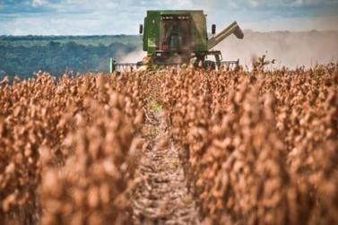 Encontro online debaterá seguros para as culturas de soja e milho