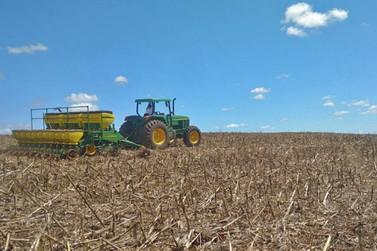 Com atraso, plantio do milho segunda safra está praticamente concluído em MT