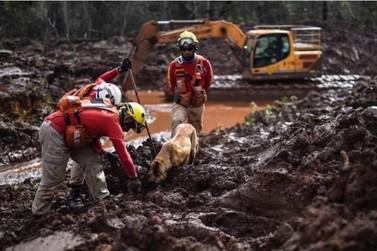 Heróis! Em Mato Grosso, animais reforçam atuação da Segurança Pública