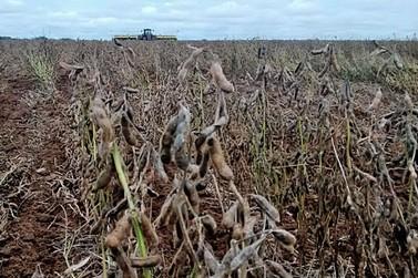 Soja: produtores de MT têm perdas de R$ 1,3 bilhão com excesso de chuva