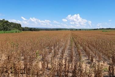 Faltam menos de 10 mil hectares de soja para serem colhidos em MT