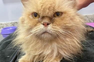 Gato desaparecido é encontrado em bueiro; família paga recompensa de R$ 1 mil