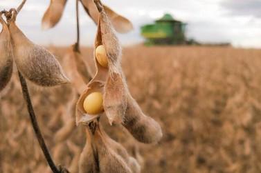 Mato Grosso está quase terminando a colheita da soja, falta menos de 1%