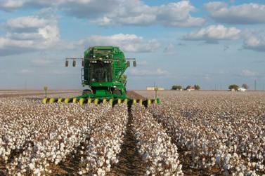 Mato Grosso começa a colher algodão safrinha