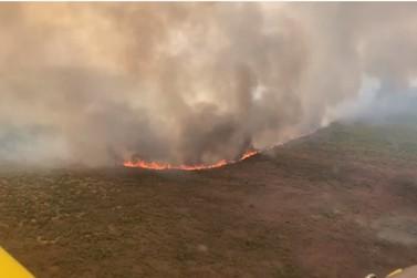 15 cabeças de gado morrem durante incêndio em fazenda em MT