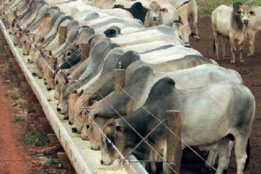 Comissão aprova isenção de PIS/Pasep e Cofins para ração de gado e peixe