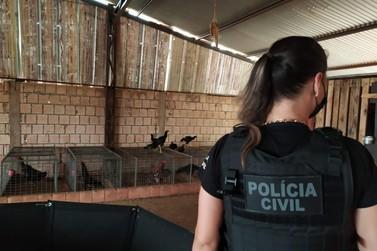 Polícia Civil desarticula estrutura de rinha de galo com mais de 80 animais