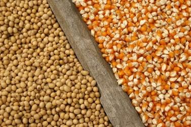 Soja e milho: custo elevado e tributação prejudicam rentabilidade em MT
