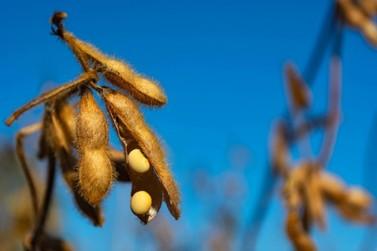 Com impulso do dólar, vendas de soja de MT atingem 37,3% da safra 2021/22