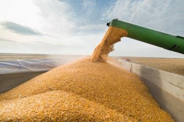 Em sete dias Brasil já importou 27,99% mais milho do que todo setembro de 2020