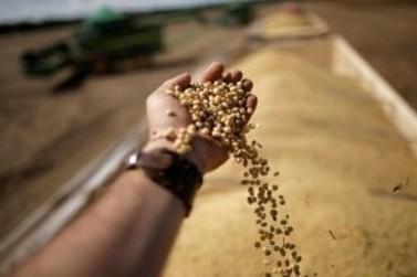 Soja convencional tem rentabilidade superior à soja transgênica em Mato Grosso