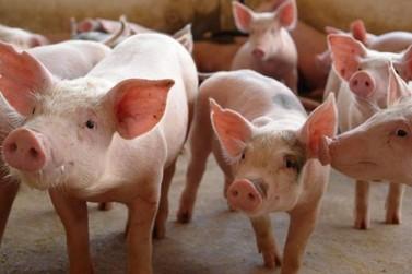 Exportação de carne suína segue em bom ritmo, mas preço da tonelada cai