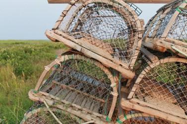 Animais silvestres são caçados ilegalmente em distrito marianense