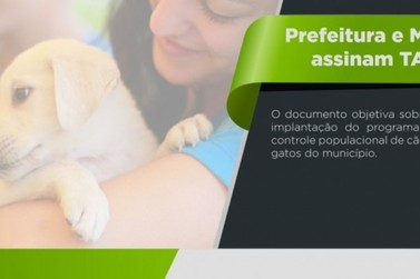 Prefeitura e MP assinam documento que prevê cuidados com animais de rua