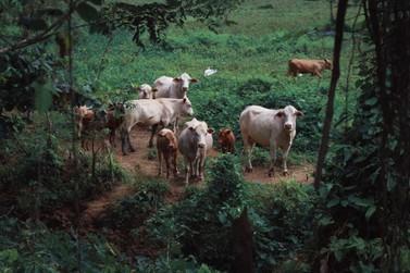 Prefeitura de Mariana busca auxiliar seus produtores rurais