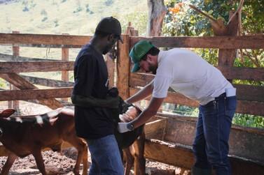 Prefeitura inicia II fase de vacinação contra doença em bezerros
