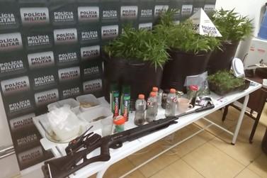 Plantação de maconha é localizada pela Polícia Militar em Ouro Preto