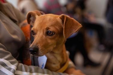 União e responsabilidade em prol dos pets