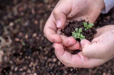 Produtores rurais cultivam mudas para reflorestamento da bacia do Rio Doce
