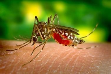 Pesquisadores da UFOP integram estudo sobre expansão do mosquito Aedes