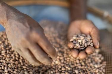 Apoio a pequenos produtores integra ações de reparação da Fundação Renova