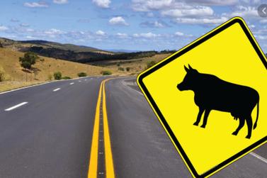 Câmara aprova lei que obriga cidadãos a socorrerem animais em vias públicas