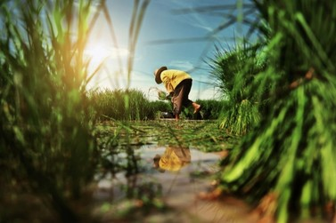 Especialistas alertam produtores rurais sobre os cuidados contra a Covid-19