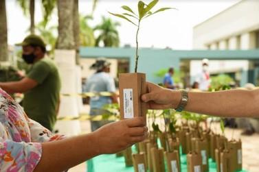 300 mudas de árvores são distribuídas em comemoração ao Dia do Meio Ambiente