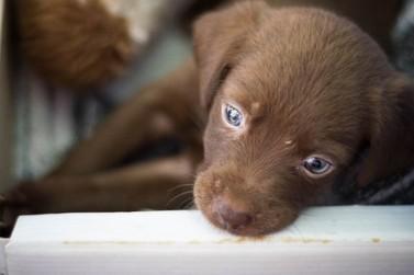 Centro de Convenções recebe mais um evento de adoção de animais neste sábado