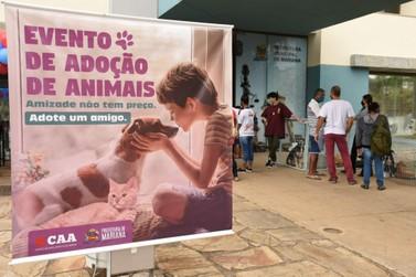 Evento de adoção de animais se tornará fixo