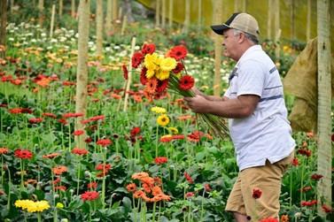 Estado lança campanha de incentivo ao consumo de flores