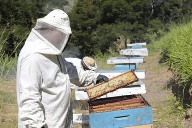 Fazenda Ibiaci no bairro Espraiado faz sua primeira coleta de mel