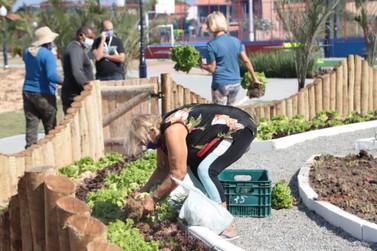 Parque a céu aberto de Maricá tem sua primeira colheita da horta comunitária