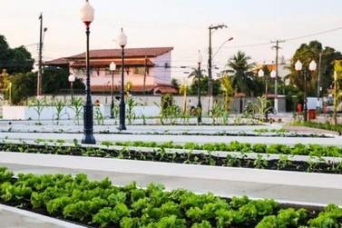 Produtos da colhidos na praça agroecológica são distribuídos em Maricá