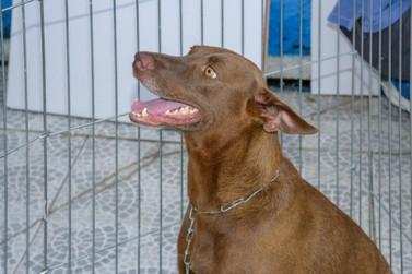 Nova lei municipal visa garantir controle populacional de animais de rua