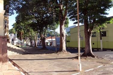 Novas datas para a erradicação de árvores no Centro
