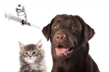 Prefeitura de Mogi inicia vacinação de cães e gatos contra a raiva