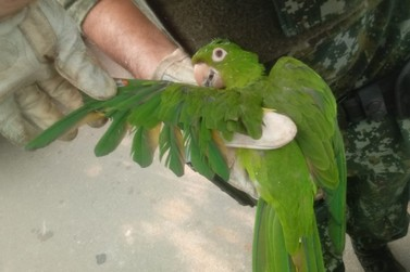 PM resgata pássaros de cativeiro ilegal em Mogi Mirim