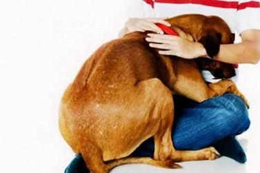 Cães com medo de fogos de artifício: o que fazer?