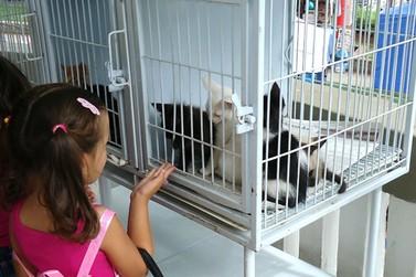 Acontece neste sábado a Feira para adoção de cães e gatos de Atibaia