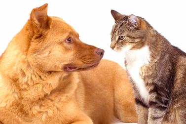 Famílias que têm CadÚnico podem se cadastrar em projeto de castração de animais