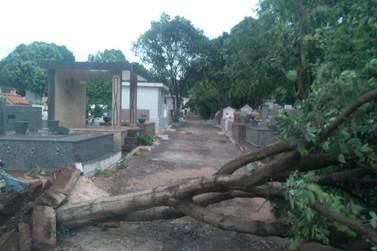 Cerca de sete árvores caíram no Cemitério Central e causaram estragos em túmulos