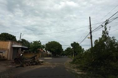 Mais de 30 árvores caíram e pelo menos 30 casas foram destelhadas em Paranavaí