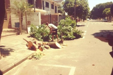 Homem é preso por cortar árvore sem autorização, no Jardim Ouro Branco