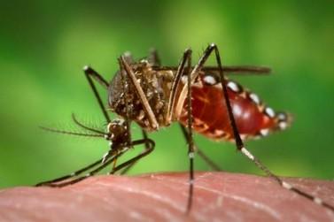 Aumentam os casos de dengue no estado; Paranavaí soma 71 confirmados