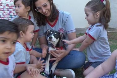 Cachorrinha furtada é devolvida a alunos de creche em Paranavaí